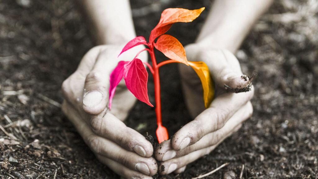 pianta che nasce da terreno fertile, così come il brainstorming può trovare terreno fertile in tutti i campi