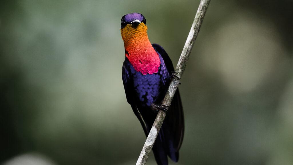 Uccello che guarda con attenzione